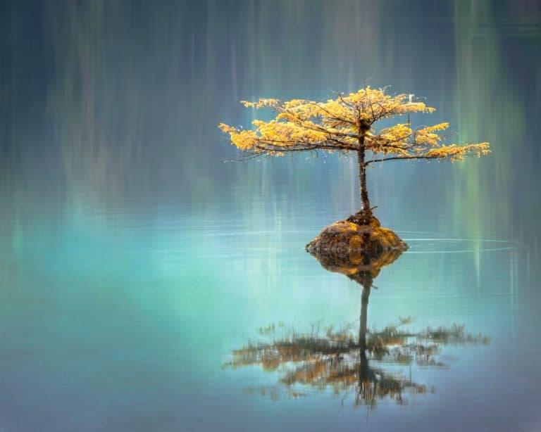 Relaxing Tree Island